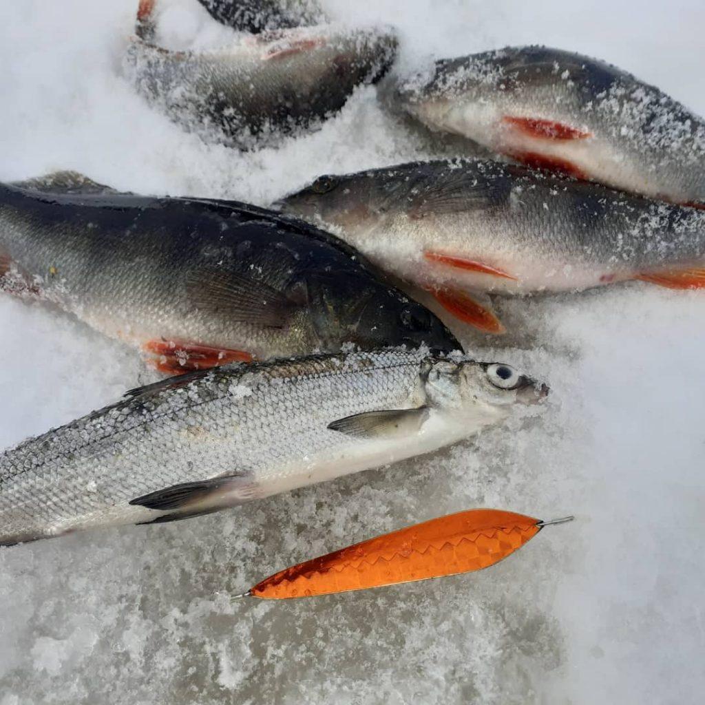 Hiihtolomaviikolla vanttauskoskella kala oli syönnillään.SM-ellu 90 pitkällä 20 cm,n tapsilla toimi hyvin vähän syvemmässä